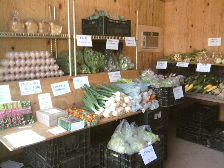 Market Style CSA at the PVF East