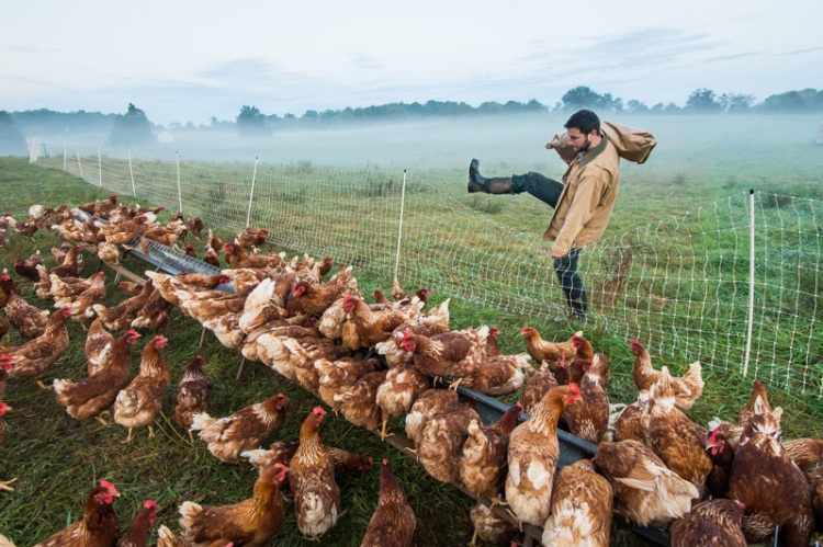 Here is a picture of Farmer Jesse Straight of Whiffletree Farm feeding his hens on pasture!