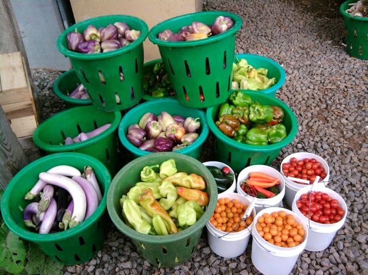 Veggies ready to go to market